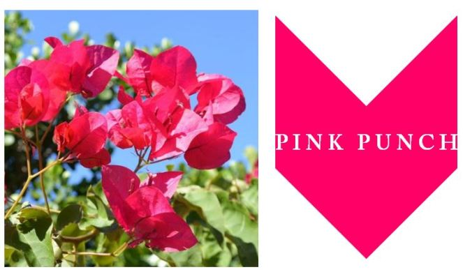 pink punch logo